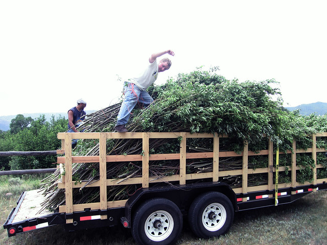 Artist Patrick Dougherty transports woody material from a collection site. Photo courtesy of Patrick Dougherty.