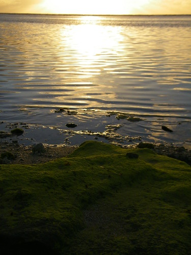 green beach water paradise tonga