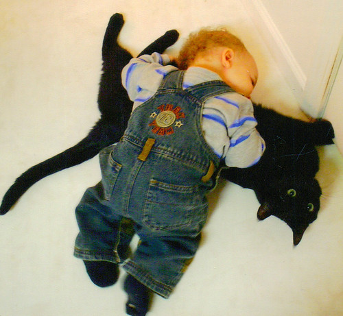 Squish The Cat!