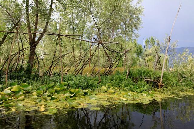 dal lake shikara ride