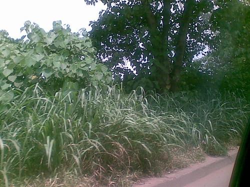 nigeria ngr