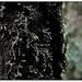 treedrops