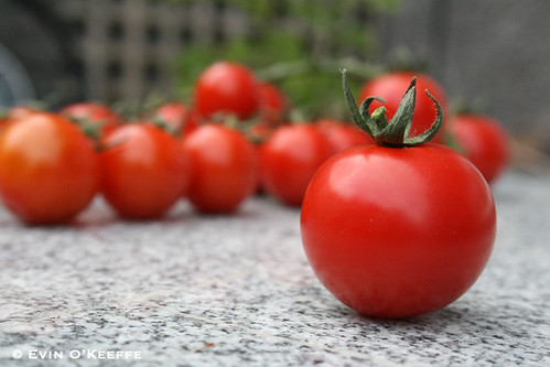 Tastier than Rubies, Cork-grown Tomatoes