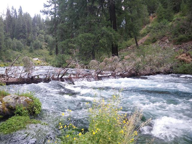 "Dangerous river wide tree ""strainer"" | Photo Court ..."