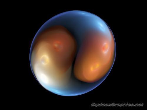 Embryo / Zygote