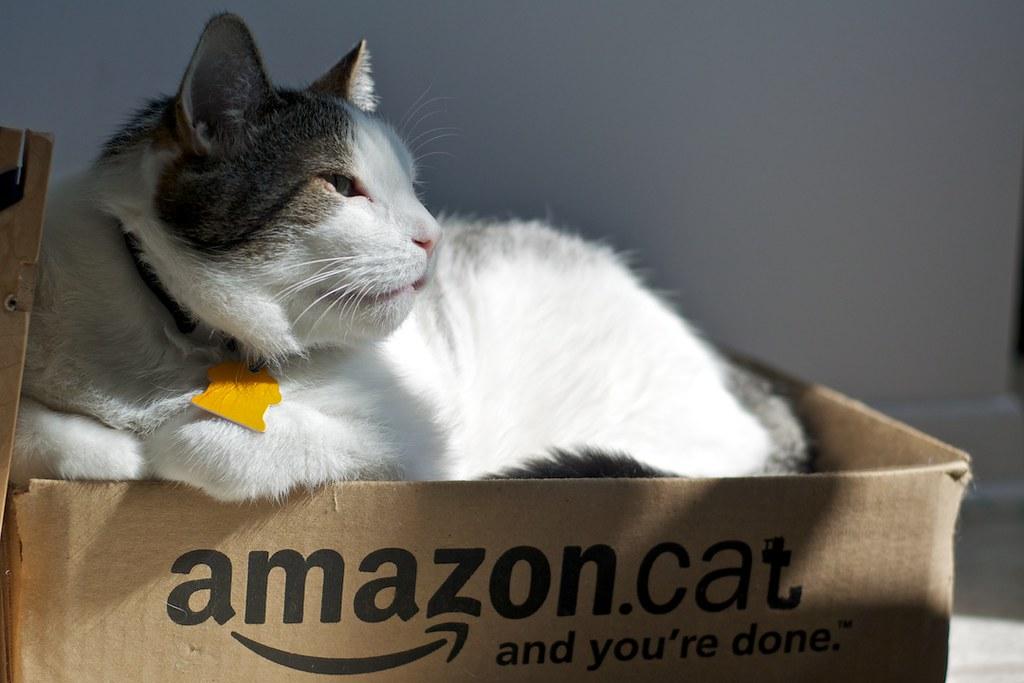 amazon.cat