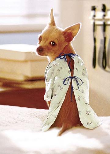 Pet Insurance: Is it Worth the Money?