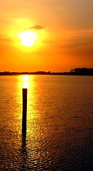 Shell Island Florida II