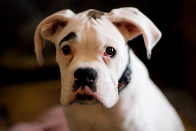 Dog Named Emma