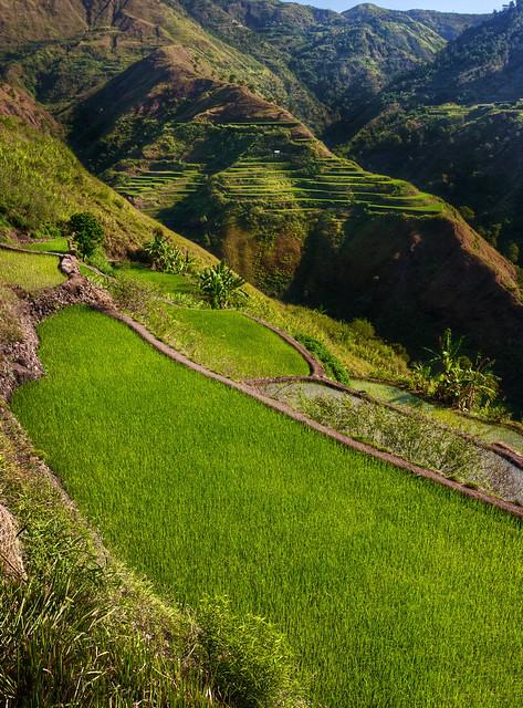Buscalan Rice Terraces Kalinga Luzon Philippines Flickr Photo Sharing