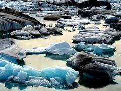 Field of Icebergs