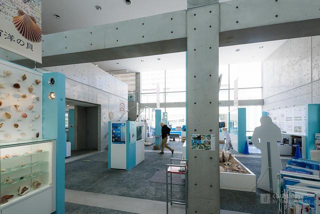 Inside of Nishinomiya Shell Museum (西宮市貝類館)