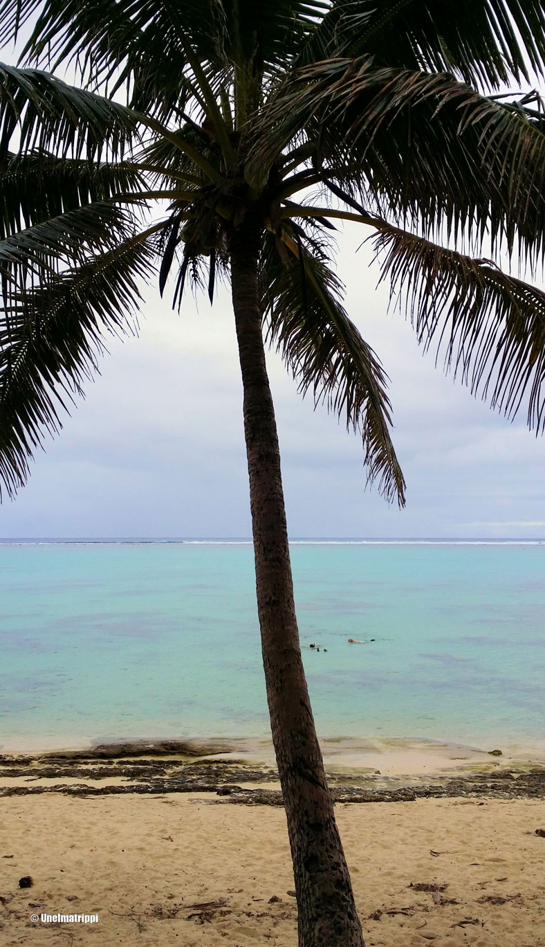 Palmu, Rarotonga, Cookinsaaret