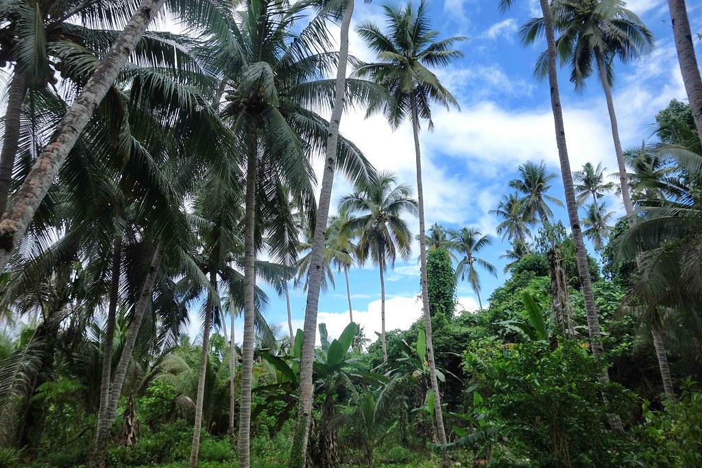 Bomba - Jungle