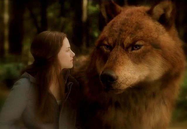 twilight jacob black wolf - photo #17