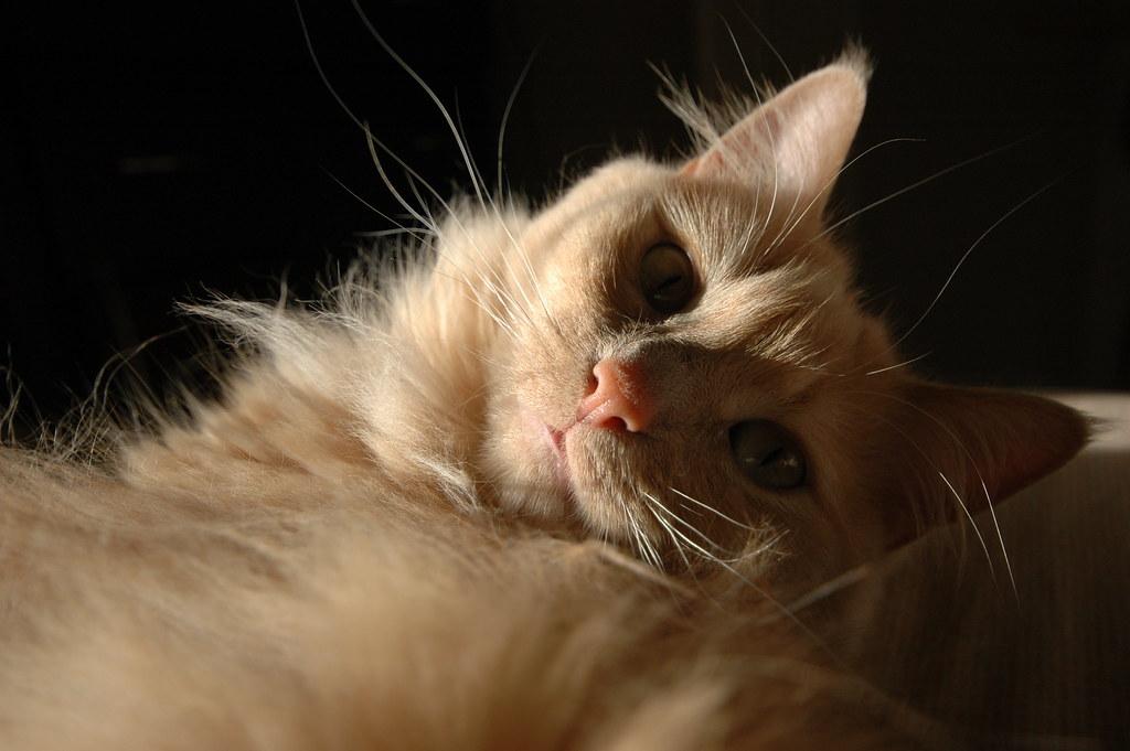 Orange Fluffy