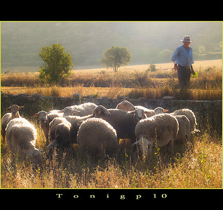 El pastor y su rebaño / The shepherd and his herd