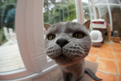 Fisheye cat