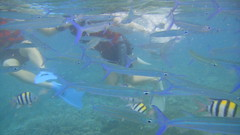 fish, sports, marine biology, underwater sports, water sport, underwater, reef,