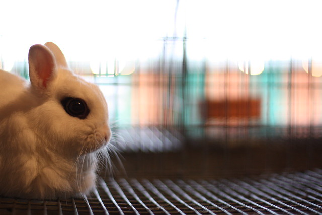 Emo Bunny Flickr Photo Sharing