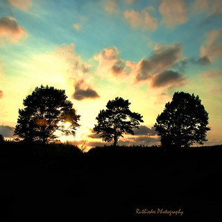 Three trees~