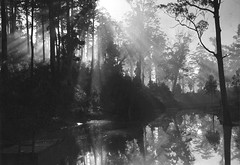 Early Morning, Pemberton, Western Australia, by E.O. Hoppé 1930