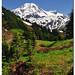 Alpine Color