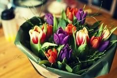 tulip(1.0), flower(1.0), plant(1.0), flower bouquet(1.0), floristry(1.0), petal(1.0),