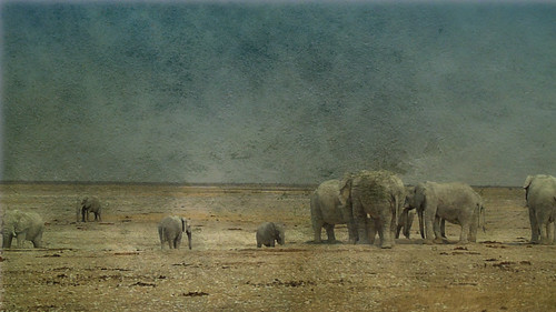 Elephants in the salt pan of Etosha