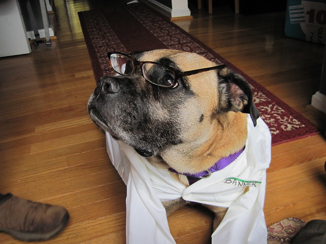 The mild mannered Greta Banner. Greta in a white lab coat with a name tag that says Banner and wearing glasses.