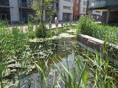 Vastra Hamnen, rain garden