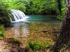 nature reserve, stream, waterfall, rainforest, leaf, water, tree, river, nature, old-growth forest, creek, body of water, watercourse, forest, natural environment, ravine, wilderness, jungle,
