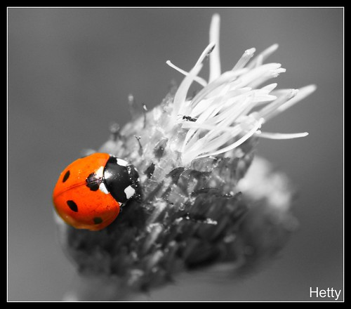 Ladybug in black and white...
