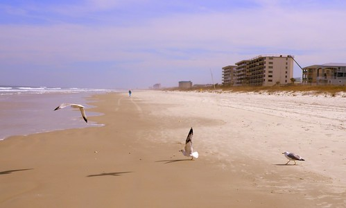 ocean seagulls seascape beach birds animals clouds landscape wings sand surf waves florida dunes scenic blueskies daytonabeach condos atlanticocean centralflorida beachscape cooloutdoorpics readyfortakeoff usaunitedstatesofamerica daytonabeachshores beachphotography ponceinletflorida chriscrowley finefind celticsong22 easternusaphotobugs picsforpeace