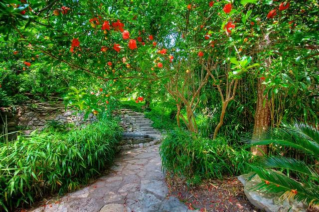 Red flowering tree japanese gardens at zilker botanical g for Japanese botanical garden