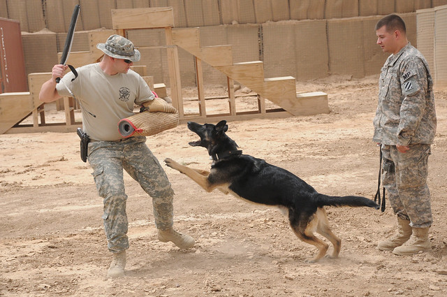 Image Result For Training Dog To