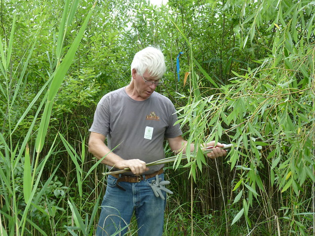 Artist Patrick Dougherty evaluates a sapling of nonnative willow (Salix atrocinerea), which is designated an invasive species in New York State. Photo by Elizabeth Peters.