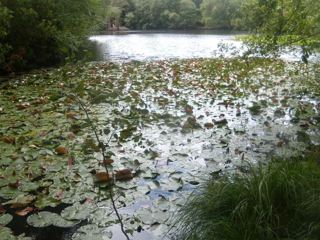Heath Pond Crowthorne to Sandhurst