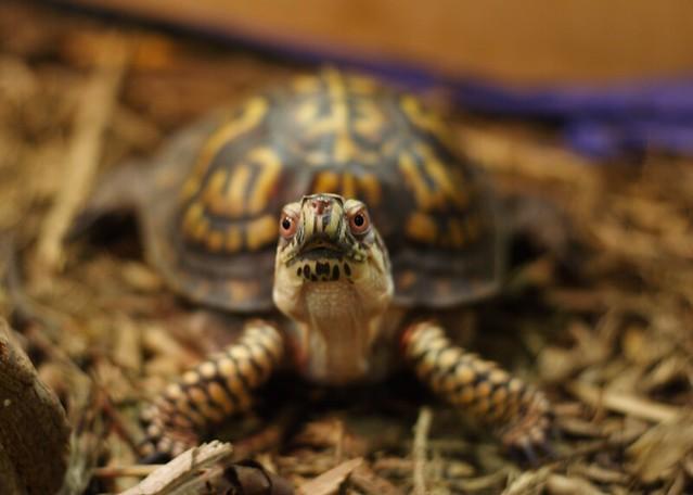 angry turtle logo - photo #19