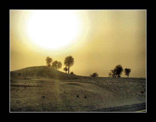 trees sunset wallpaper sun beautiful al sand dubai desert dune uae palm oasis rub khali