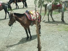 Un cheval à Yongbulakang
