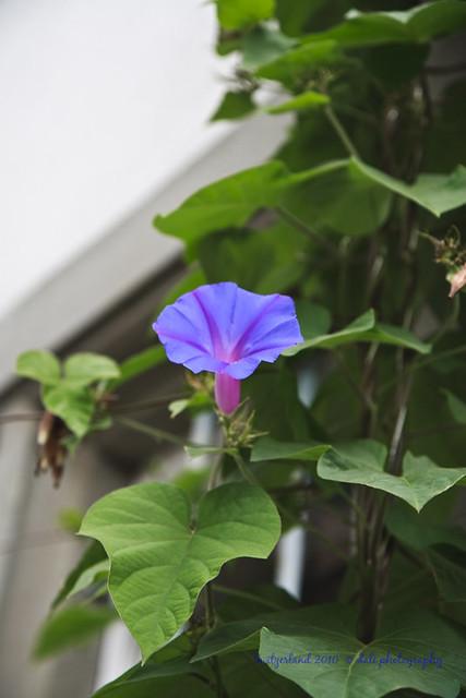 Flower in Konstanz