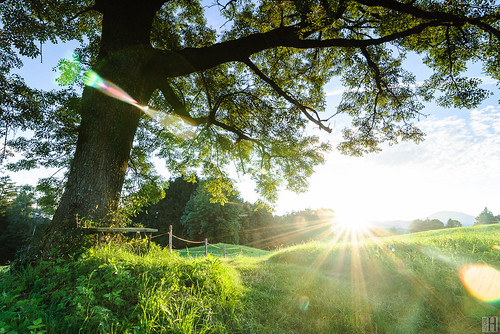 morning summer sun tree nature field backlight clouds sunrise bench landscape dawn austria early feldkirch spirit pasture rays wakeup range alp sunbeams gettyimages greengrass newday beautifulday vorarlberg schellenberg thesecretlifeoftrees oberfresch