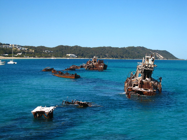 Artificial reefs at Tangalooma IMG_0569
