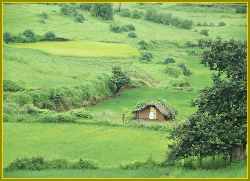 Verdant Monsoon Countryside