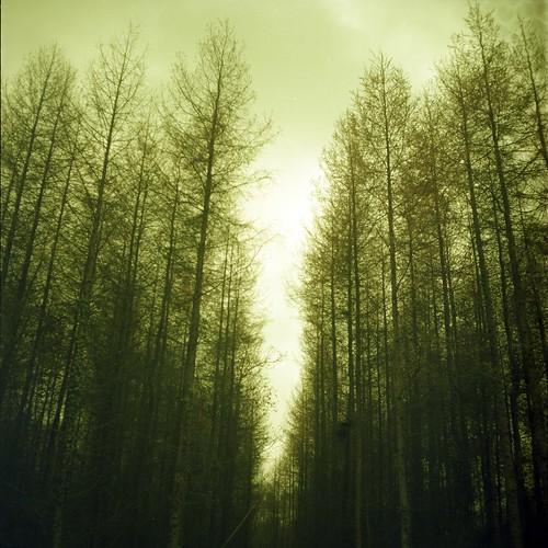 Battle Wood