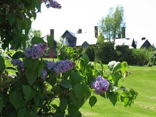 Lilacs - Inn at Shelburne Farms 1