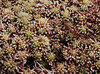sphagnum moss - Photo (c) David Shand, some rights reserved (CC BY-ND)