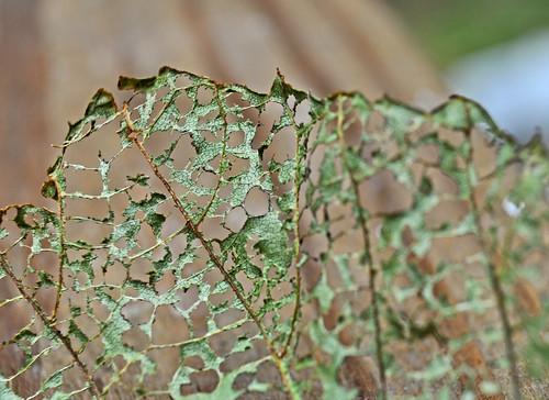 green nature skeleton leaf al emotion alabama framework lattice athensal bkhagar