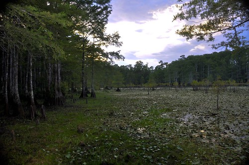 sunset landscape nationalpark nikon texas purple cypresstrees villagecreek d90 kountze bigthicket